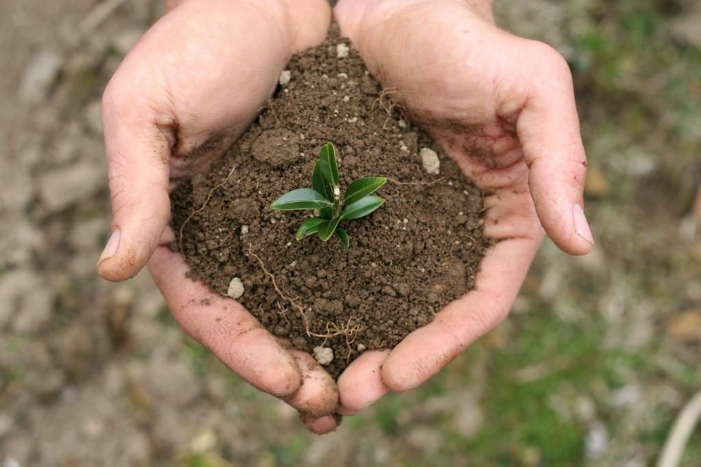 Soil Mixes from Vic Hannan Landscaping Redding, Ca